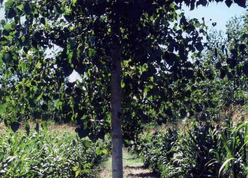 Quelle place pour les arbres hors for t dans la nouvelle pac for Chambre d agriculture luxembourg